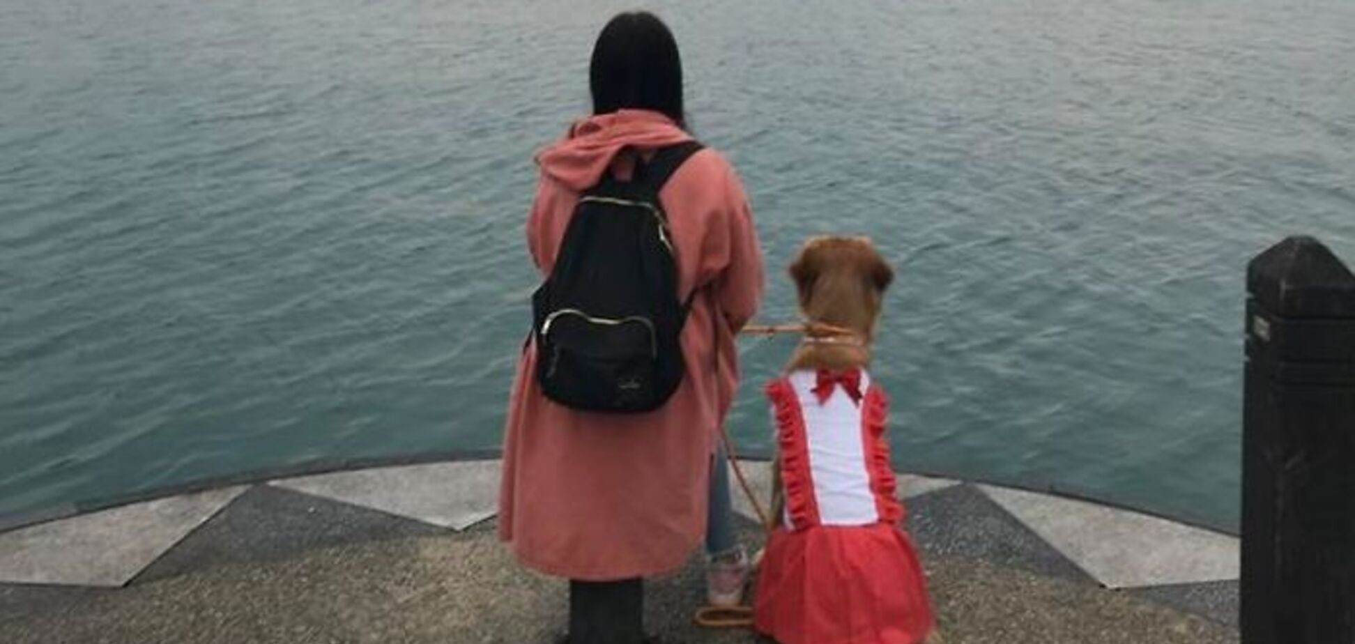 Собака спасла жительницу Тайваня от поездки в Китай: сеть поразила история