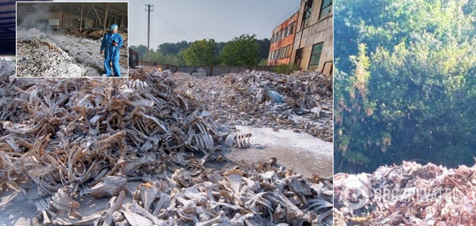 На грани катастрофы? Как уничтожалась система утилизации биоотходов