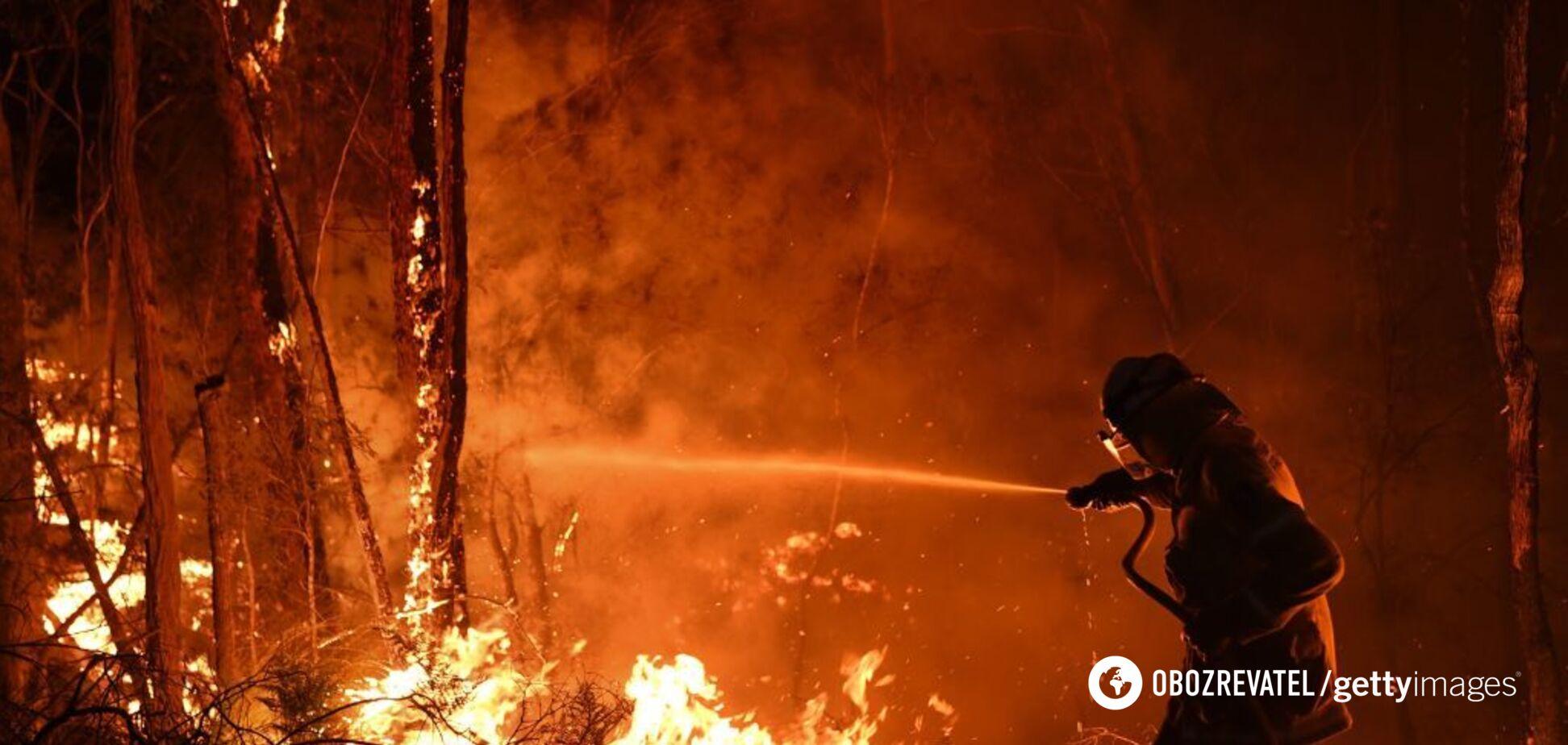 Австралию накрыли адские пожары: тысячи пострадавших, полмиллиарда погибших животных, выгорела территория с Одесщину. Фото и видео