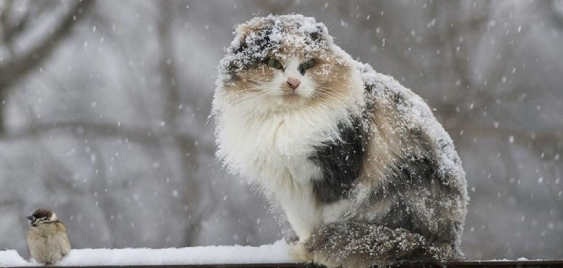 Морози до -17 та більше снігу: синоптик дав прогноз погоди на лютий в Україні