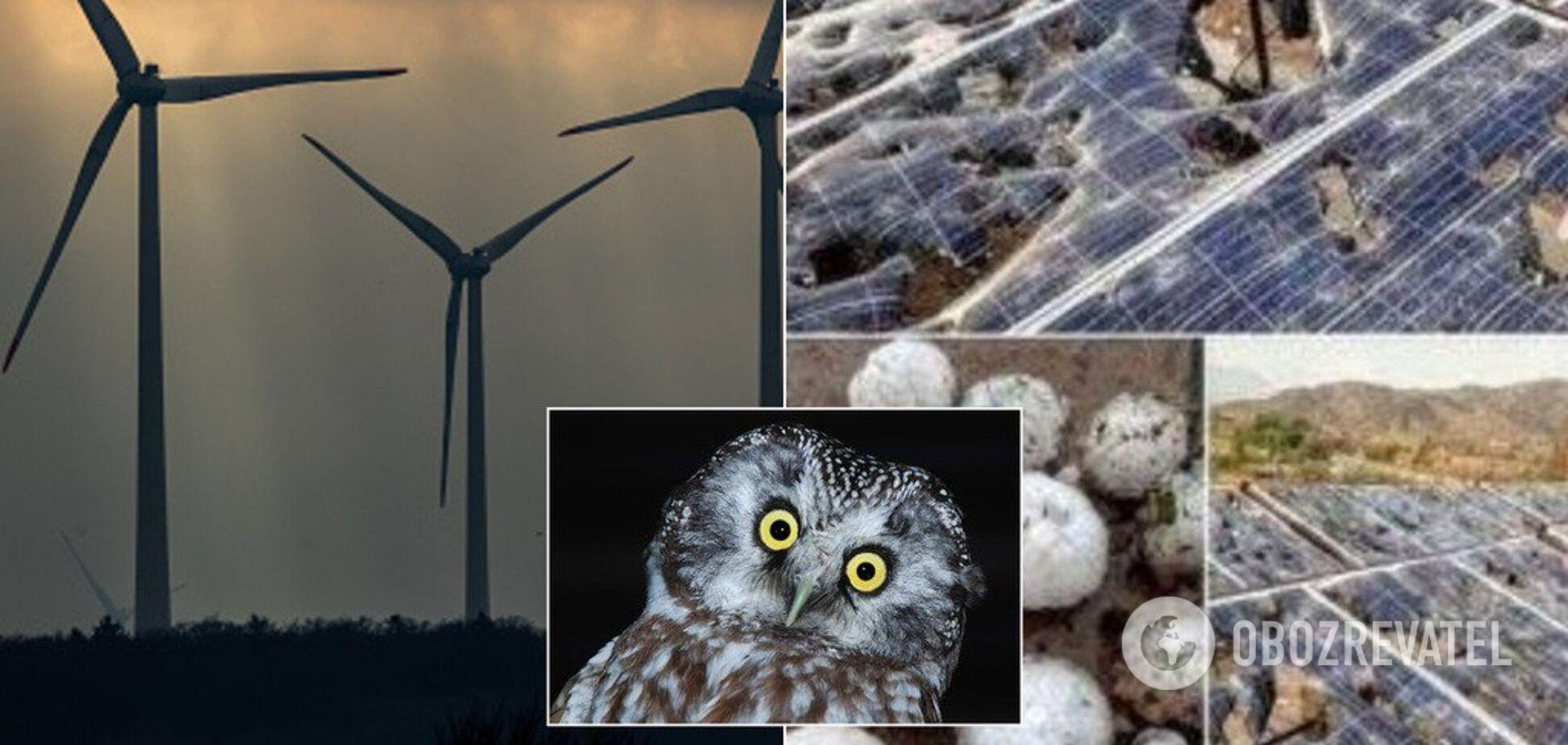 Убивает птиц и вредит мужскому здоровью: разрушаем мифы о 'зеленой' энергетике