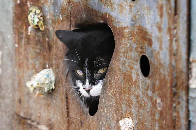 В Кривом Роге замуровали котов
