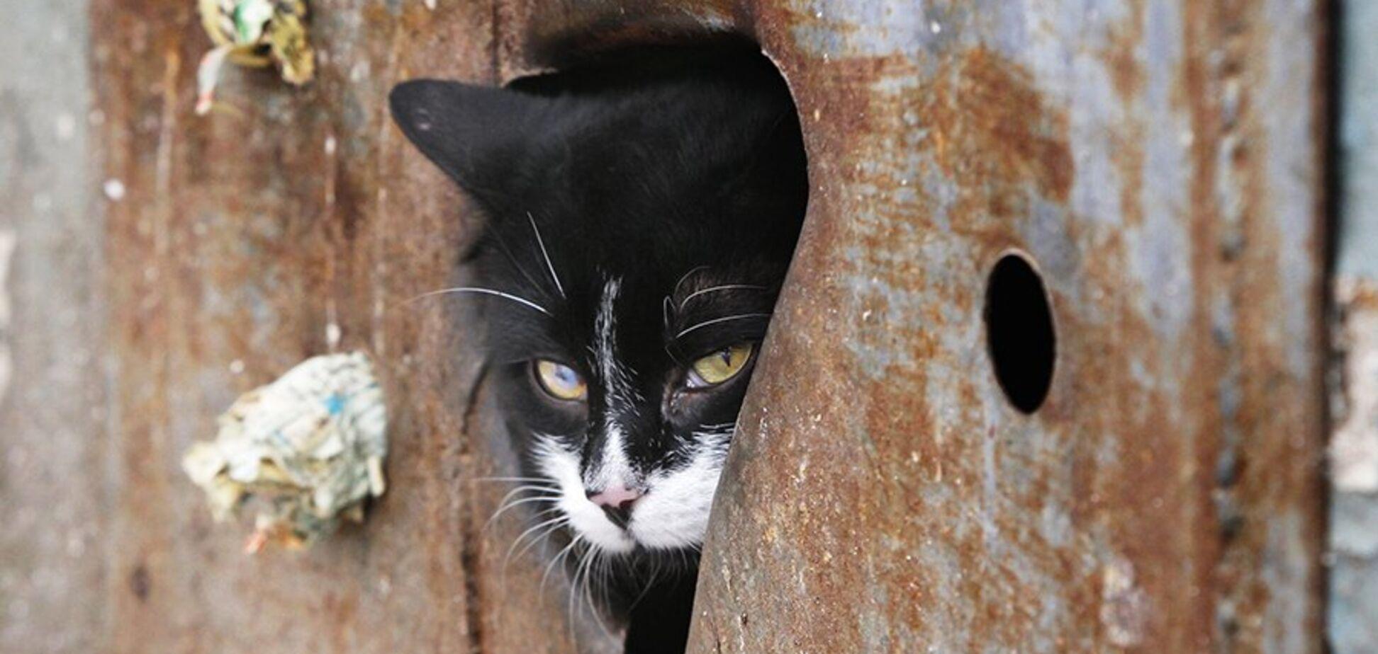 На глазах у детей: в подвале школы Кривого Рога заживо замуровали котов