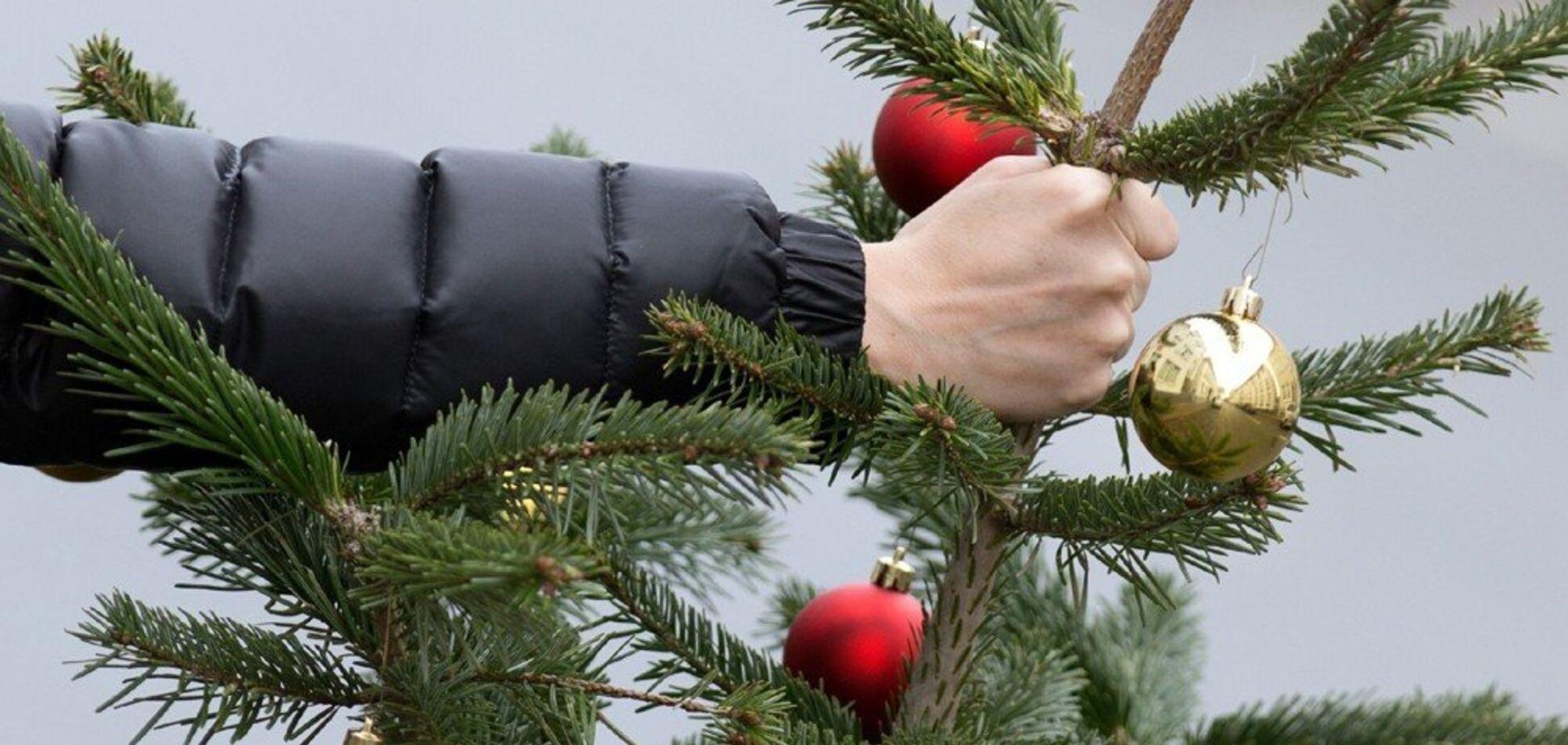 Де в Дніпрі можна здати новорічну ялинку: список адрес