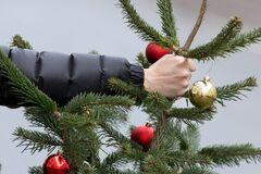 Где в Днепре можно сдать новогоднюю елку: список адресов
