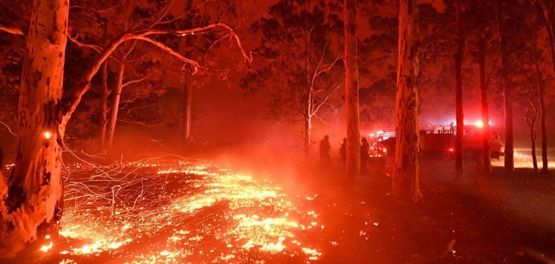 Счет пошел на миллиарды: выяснилось точное количество жертв жутких пожаров в Австралии