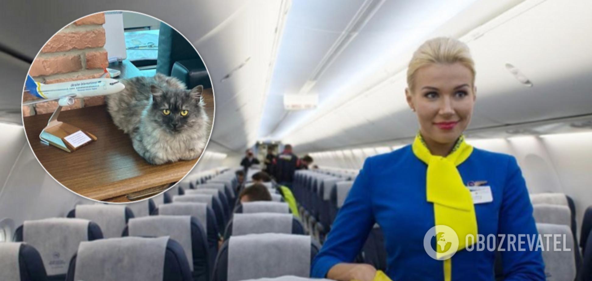 МАУ разрешили брать в салон самолета животных