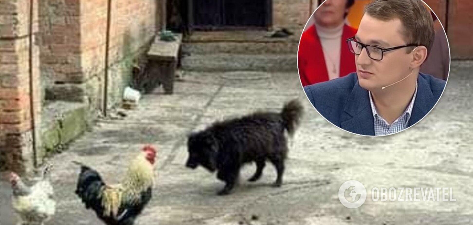 Скандал зі 'слугою' Брагарем: знайдений славнозвісний собака пенсіонерки
