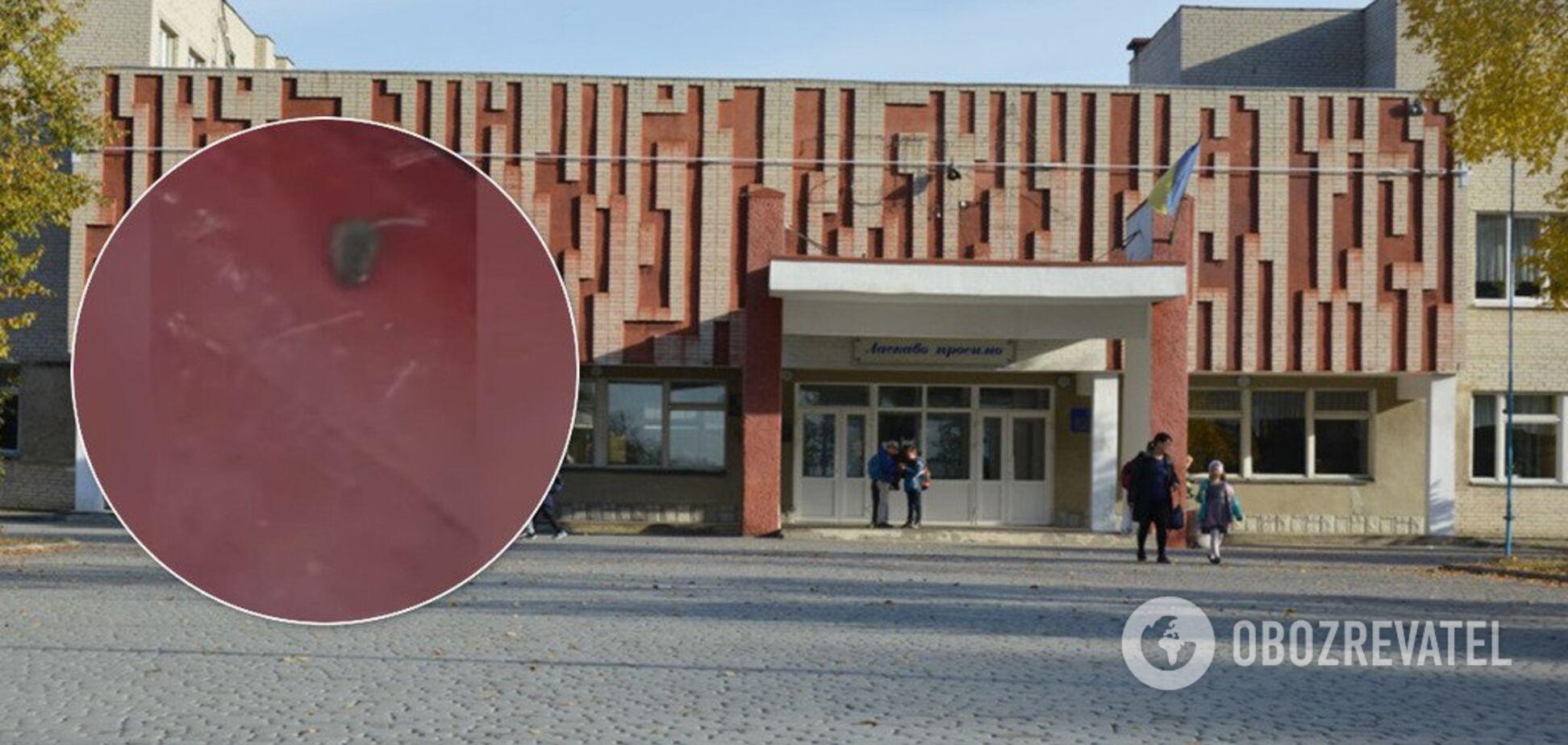 Діти ловлять їх руками: у Луцьку школа потрапила в скандал через мишей