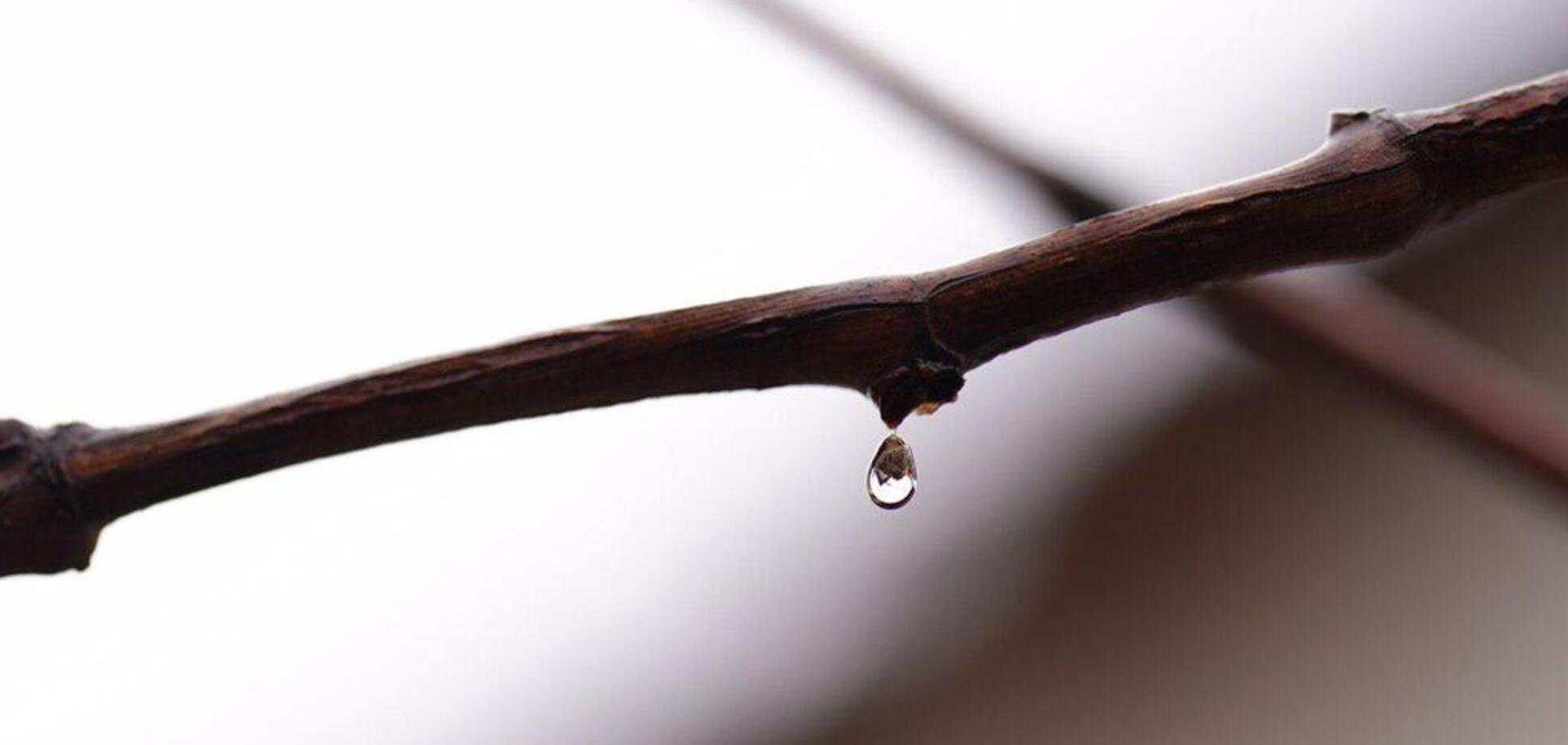 Синоптики дали мокрый прогноз погоды на 4 февраля в Одессе