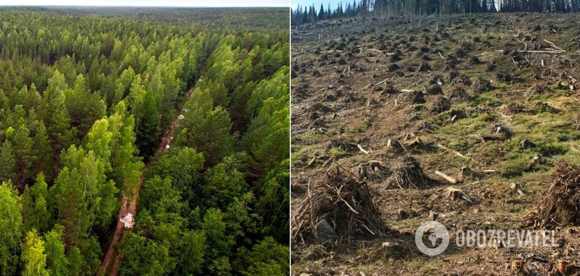 На Житомирщине ценный лес рубили на обычные дрова: названа сумма убытков