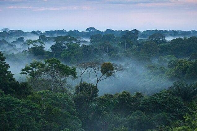 Точка неповернення: тропічні ліси почали отруювати атмосферу