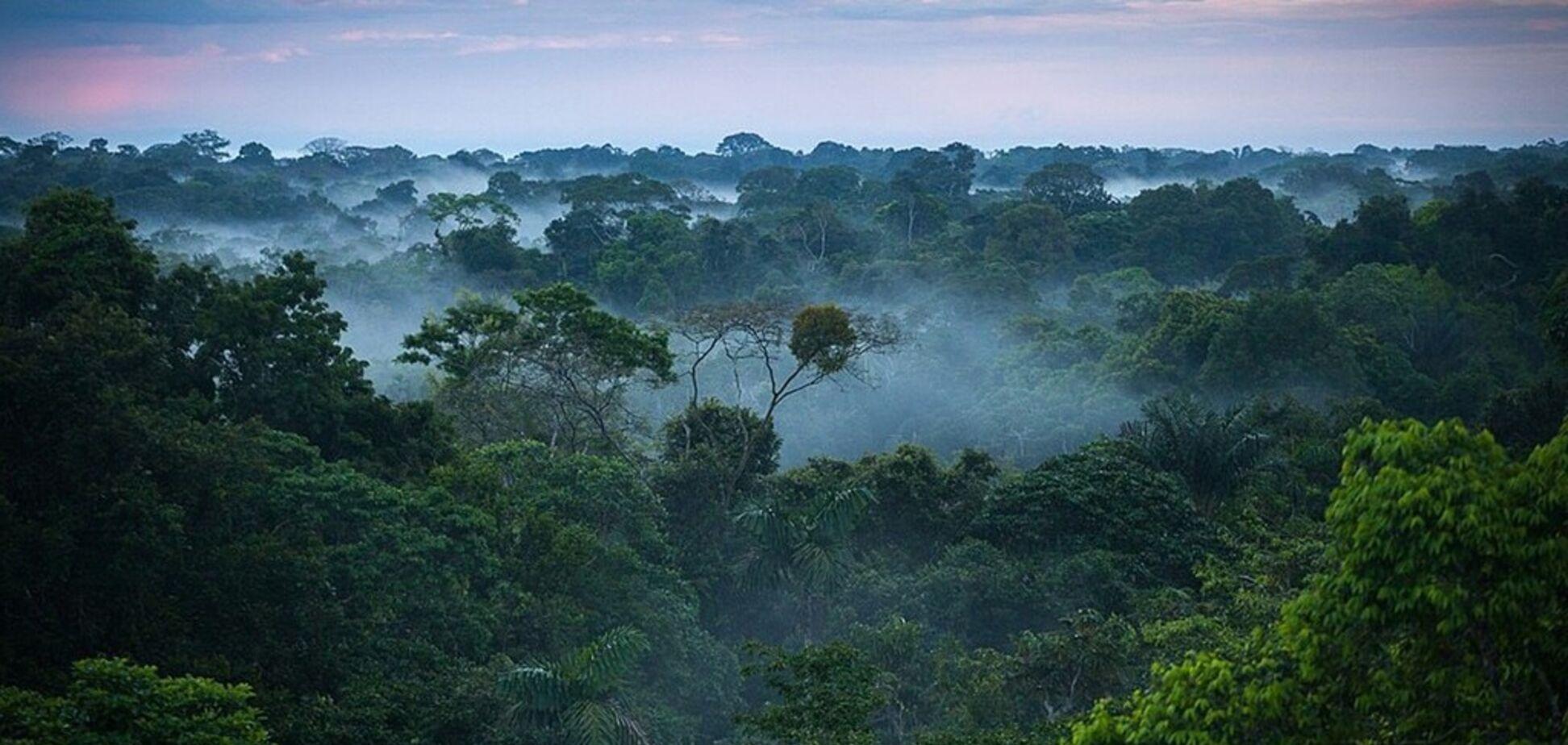 Точка невозврата: тропические леса начали отравлять атмосферу