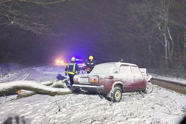 Сломанное дерево лежало на дороге