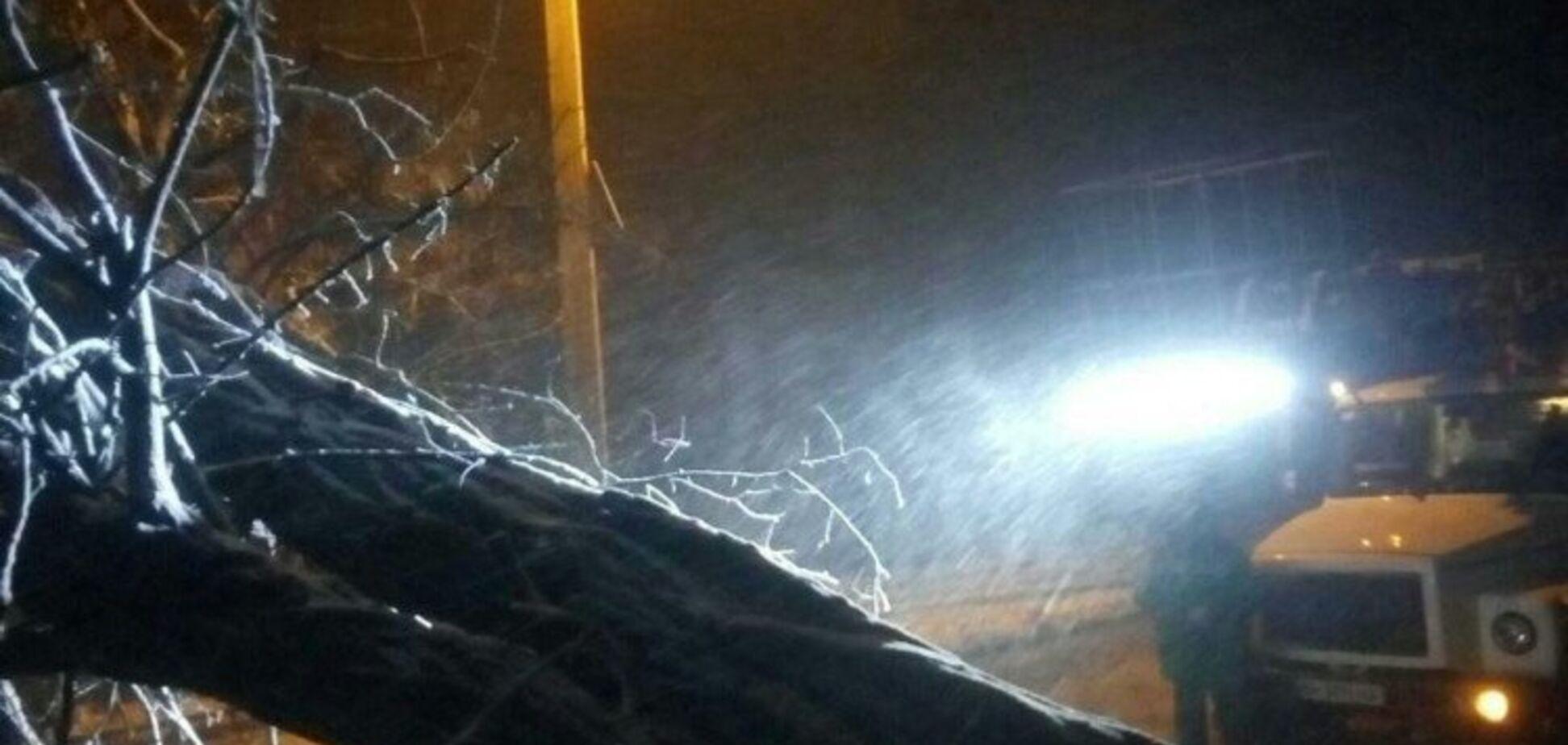 Сніговий буревій в Одесі: повалені дерева, зірвані дахи й НП на трасі