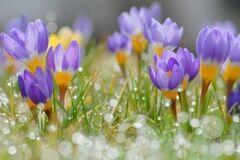 Синоптик дал прогноз погоды на весну в Украине
