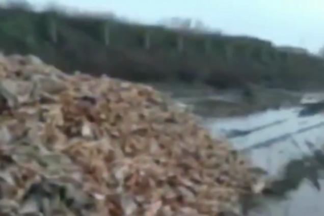 Тонны трупов куриц/скриншот из видео