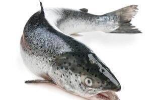 Аллерген лосося