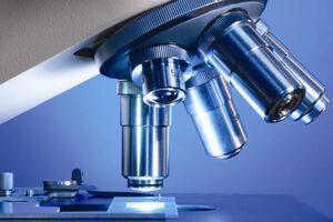 Микроскопическое исследование на наличие клещей рода Demodex