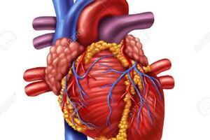 Кардиомегалия: причины возникновения и основные симптомы, способы лечения заболевания