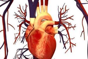 Ревматическая болезнь сердца: причини виникнення та основні симптоми, способи лікування захворювання