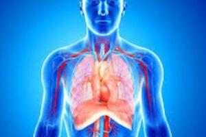 Лечение диагностика и профилактика стеноза легочной артерии