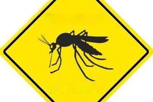 Желтая лихорадка: причины возникновения и основные симптомы, способы лечения заболевания