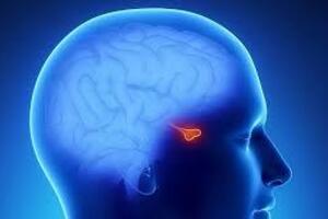Гипопитуитаризм: причини виникнення та основні симптоми, способи лікування захворювання