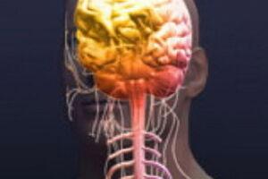 Сотрясение головного мозга: причины возникновения и основные симптомы, способы лечения заболевания