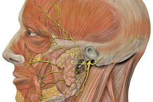 Невралгия языкоглоточного нерва: причины возникновения и основные симптомы, способы лечения заболевания