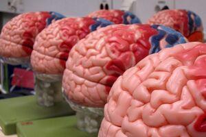 Нейробруцеллез: причини виникнення та основні симптоми, способи лікування захворювання