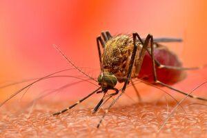 Лихорадка чикунгунья: причины возникновения и основные симптомы, способы лечения заболевания