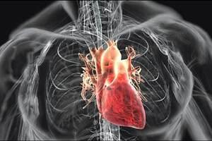 Синдром спортивного сердца: причини виникнення та основні симптоми, способи лікування захворювання