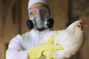 Птичий грипп: причины возникновения и основные симптомы, способы лечения заболевания