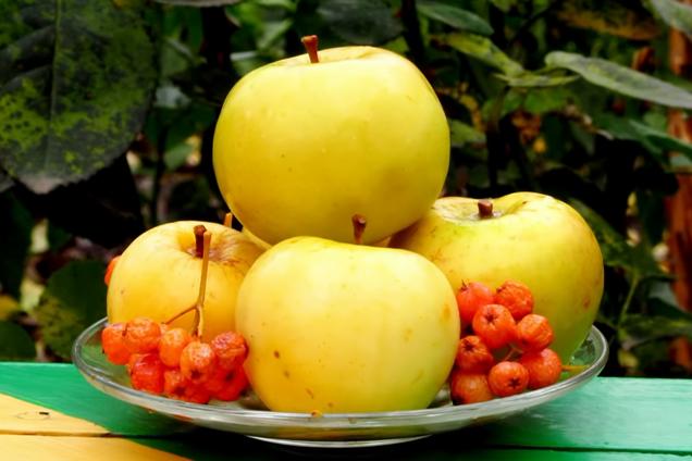 Моченые яблоки с красной рябиной