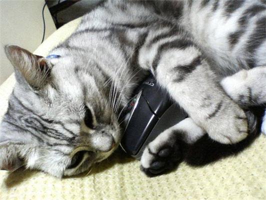Кішка і мишка