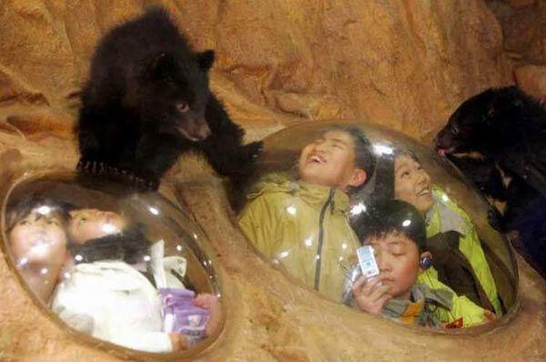 Китайский зоопарк