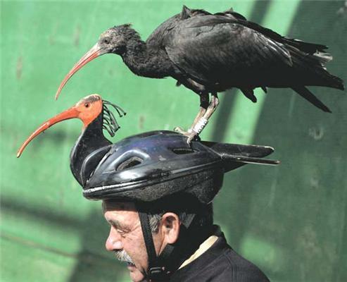 Подсадная качка