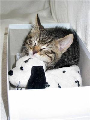 Сплять втомлені іграшки ...