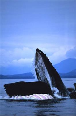 Фотографії китів