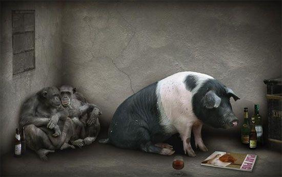 Нажерся ... Ось свиня ...