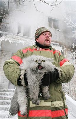 Порятунок тварини в Бобруйську