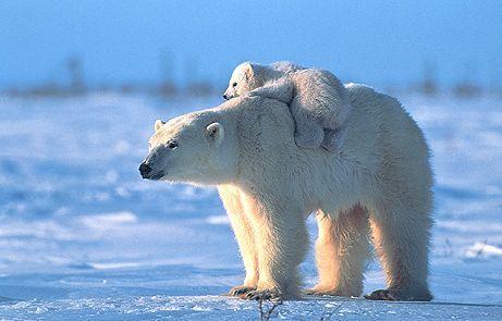 Мама, а тато там, на криголамі?