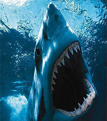 Великі і небезпечні акули