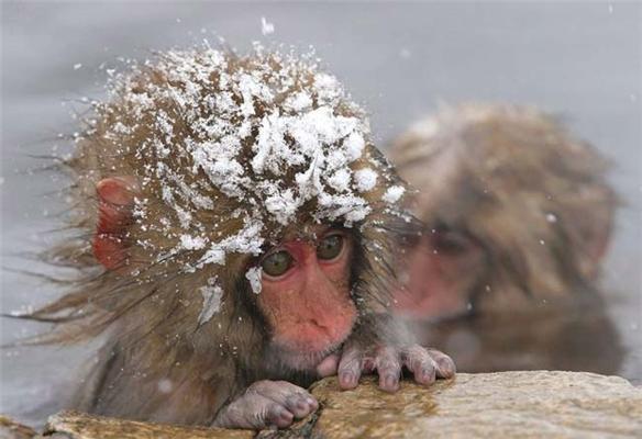 Холодно зимой макаке...
