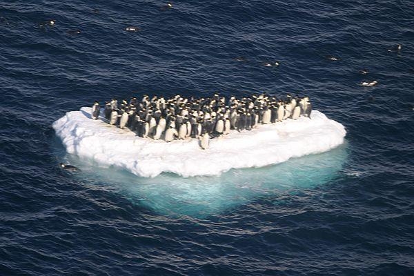 Евакуація пінгвінів