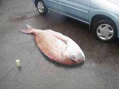 Ловись, рибко ...