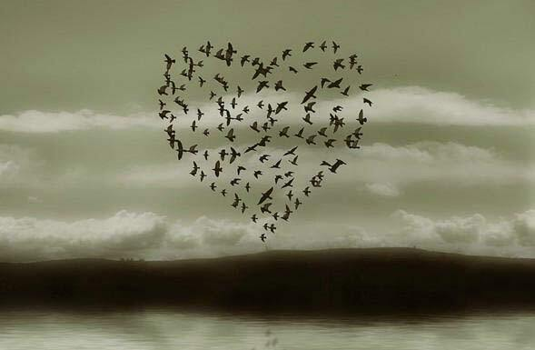 Птахи - і ті за Тимошенко