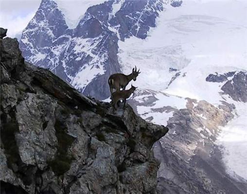 Альпіністка моя, скалолазка ...