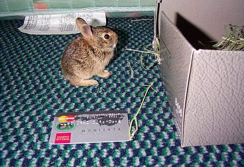 Банкоматный кролик